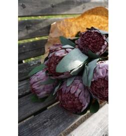 Protea, lila, konstgjord blomma