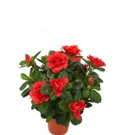 Azalea, röd, konstgjord blomma