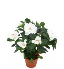 Azalea, vit, konstgjord blomma