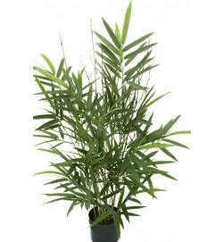 Bambu, konstgjord krukväxt