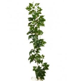 Hängväxt, cissus, grön, konstgjord