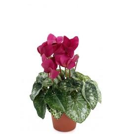 Cyklamen, lila, konstgjord blomma
