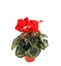 Cyklamen, röd, konstgjord blomma