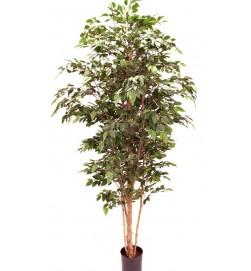 Ficus natasja, konstgjord