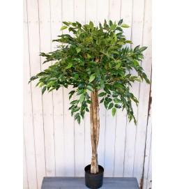 Ficus Natasja uppstammad, konstgjort träd