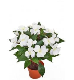 Flitiga Lisa, vit, konstgjord krukväxt sommar