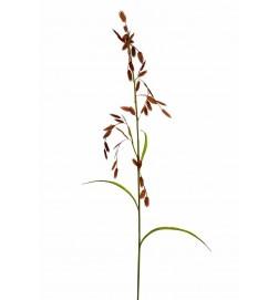 Gräs, konstgjort,  brunt med ax