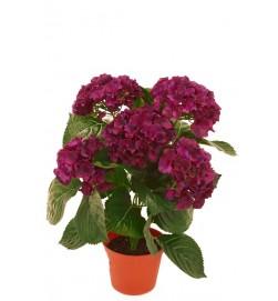 Hortensia, röd lila, konstgjord krukväxt