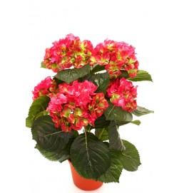 Hortensia, rosa lime, konstgjord krukväxt