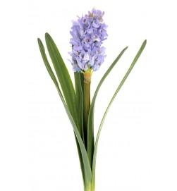 hyacint, blå, konstgjord blomma