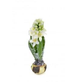 Hyacint, snö, konstgjord blomma