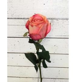 Ros, lax, aprikos melerad, konstgjord blomma