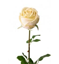 Ros, ljusgul, konstgjord blomma