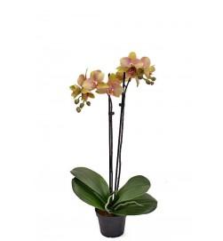 Orkidé olivgrön rosa, 2-stängel, konstgjord