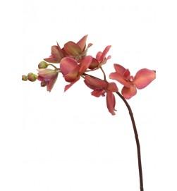 Orkidéstängel, vinröd, konstgjord