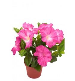 Petunia, cerise, konstgjord blomma