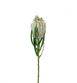 Protea vit lime, konstgjord blomma