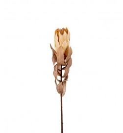 Protea, torkat utseende, konstgjord