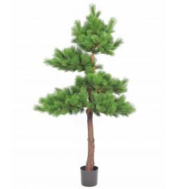 Tall, Pinus, konstgjord