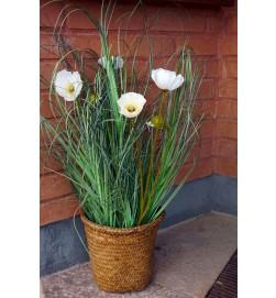 Vallmo, vit, konstgjord blomma
