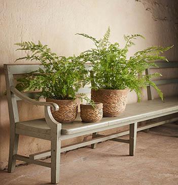 Naturtrogna gröna växter