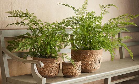 Gröna krukväxter